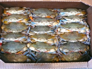 crabs packed in box
