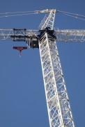 White crane.