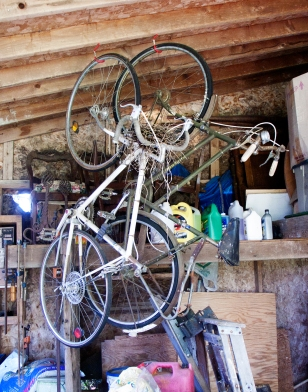 Bird's nest in bikes.