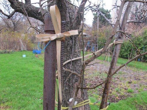 Palm cross stuck into grape arbour.