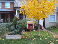 Littlest library in front yard.