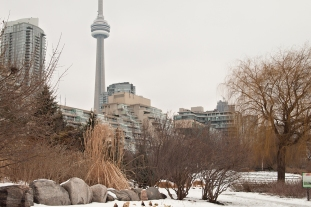 Music garden against Toronto skyline with CN tower.