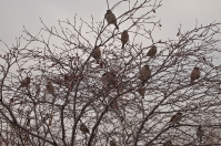 Birds on bare branches.