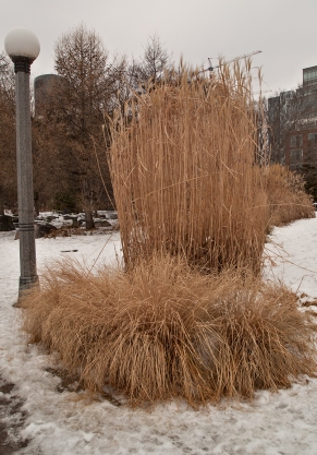 Dried grasses in Music Garden.