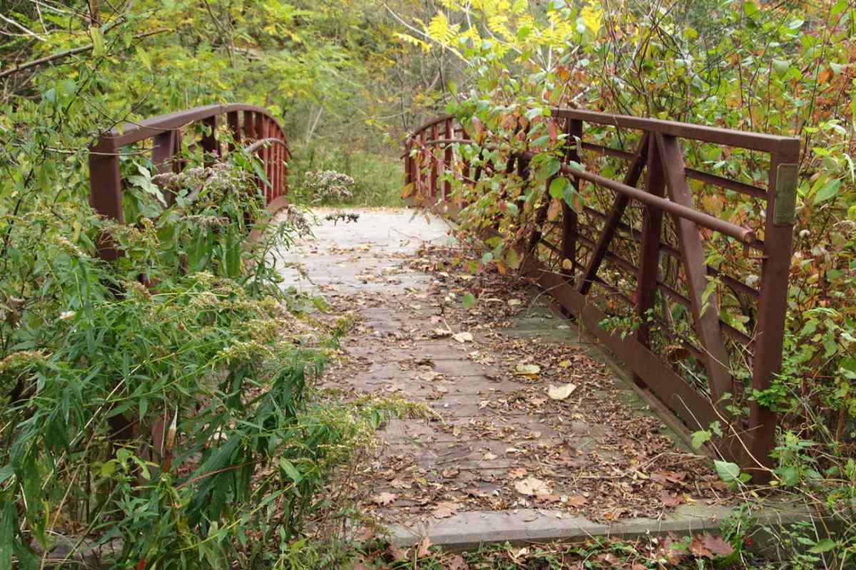 Footbridge with fallen leaves.