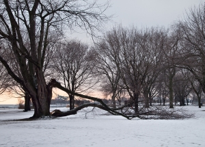 Tree at lakeshore damaged by ice storm.