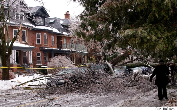 Fallen tree in Toronto after ice storm.