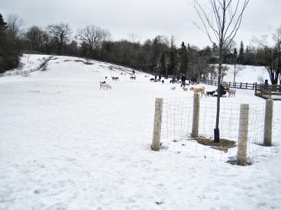 Cedarvale dog park, Toronto.