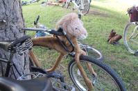 Lion bike.