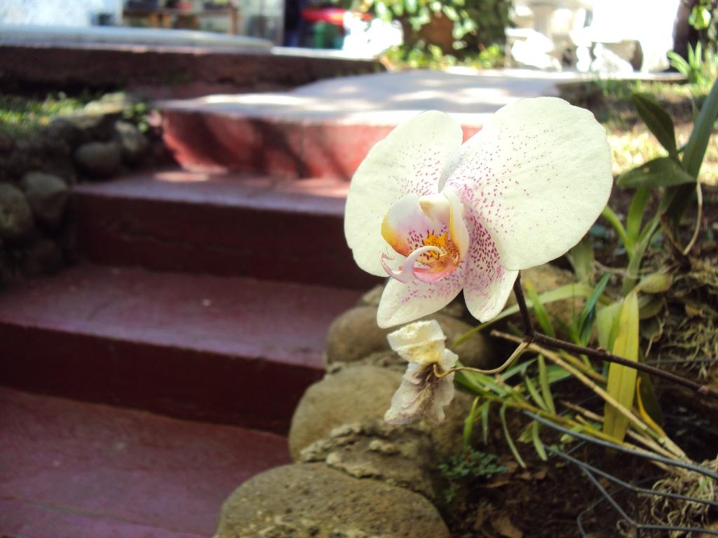 Orchid in Costa Rica.