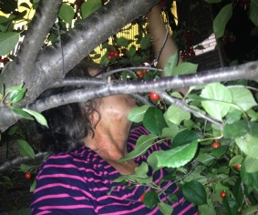 Picking cherries at night.