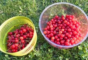 The cherry-picking take.