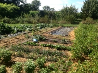 Garden plot and tarp.