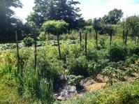 Garden in summer.