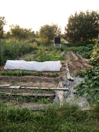 Garden with planks and tarps.