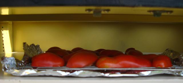 Tomatoes in dehydrator.