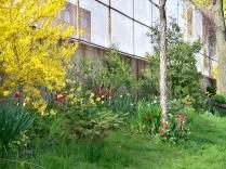 Rosemount garden.
