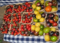 Heirloom tomatoes.