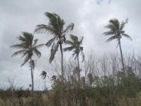 Trees in Tonga