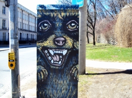 Racoon mural on box.