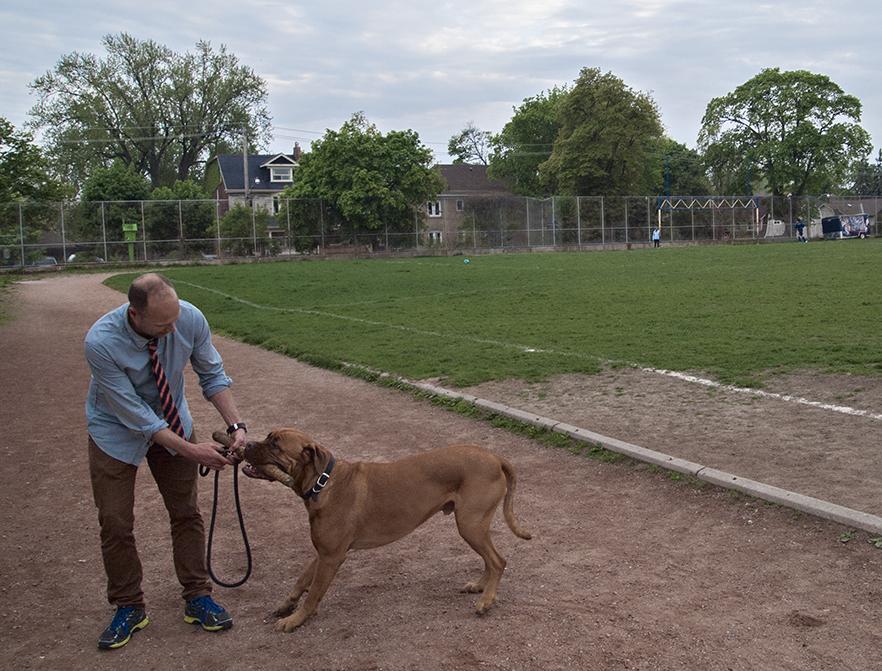 Dog in Oakwood field.