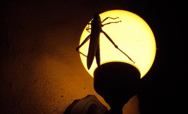 Bug on lamp.