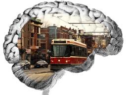 St. Clair brain.