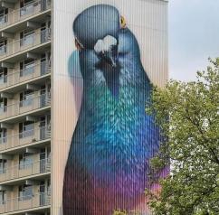 Pigeon mural.