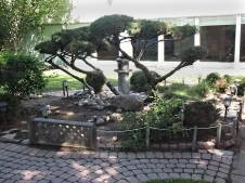 Japanese garden at cultural centre.