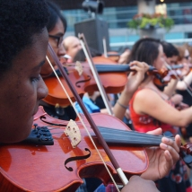 Violins.