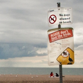 dog sign and beach