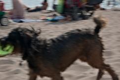 Frisbee dog.