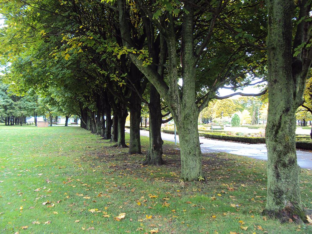 Row of trees.