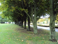 Row of trees.