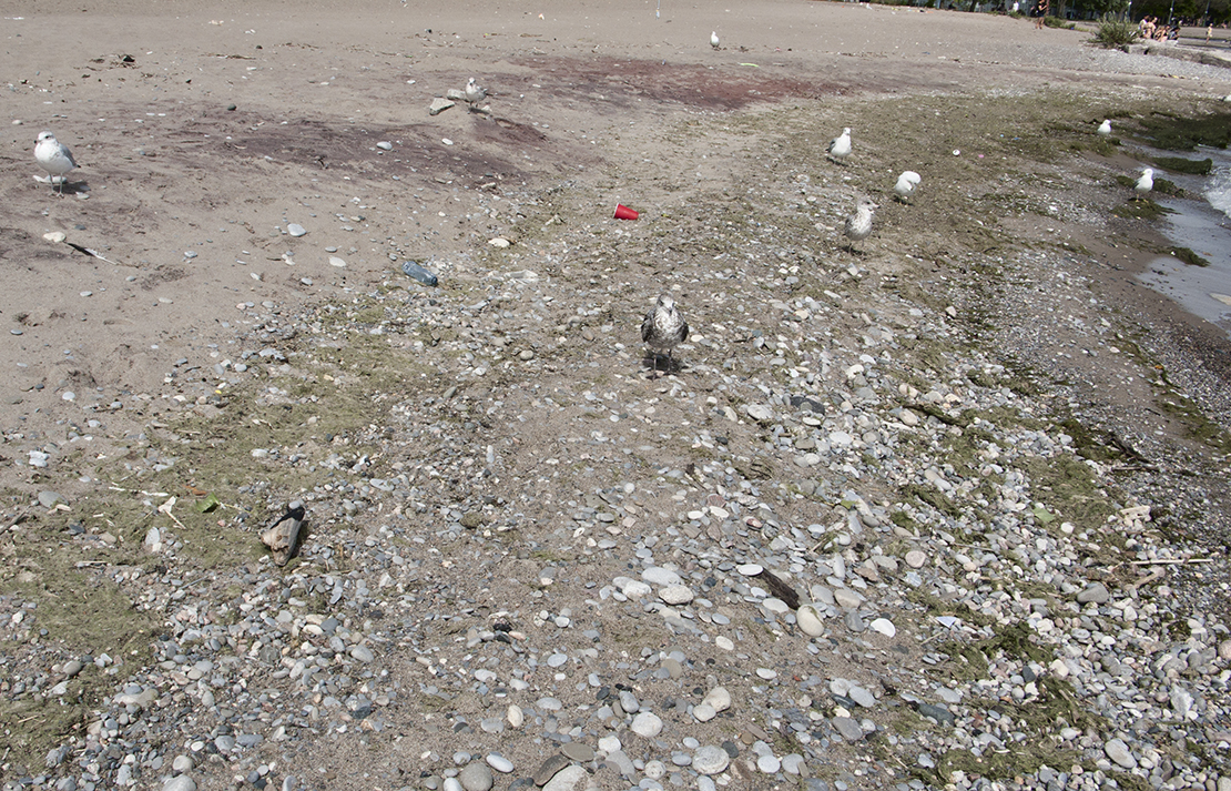 Water's edge with garbage at Woodbine beach.