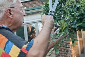 Tree artist at work.