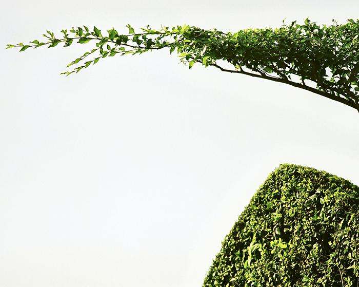 Branch reaching.