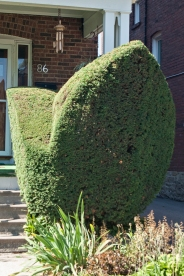 Porch topiary.