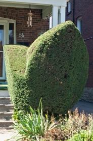 Porch topiary.