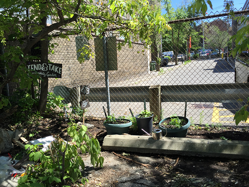Community garden with signs.