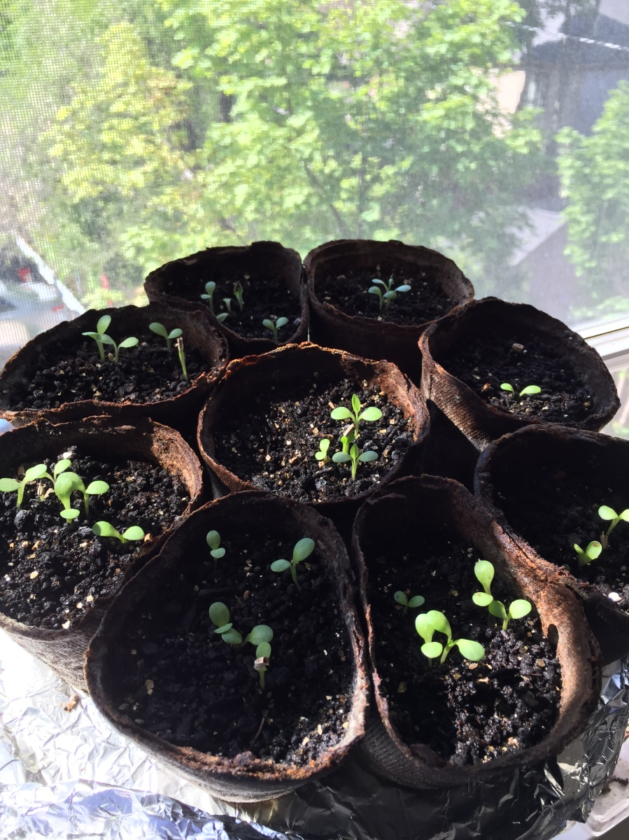 Tiny sprouts.
