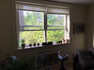 Window with seedlings.