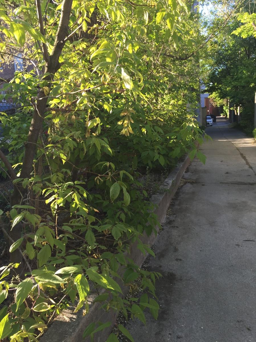 Bilton Laneway garden.