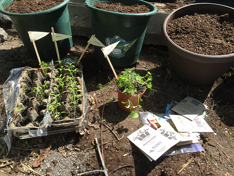 Seedlings and planters.