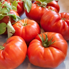 Well-travelled tomatoes and the people who lovethem