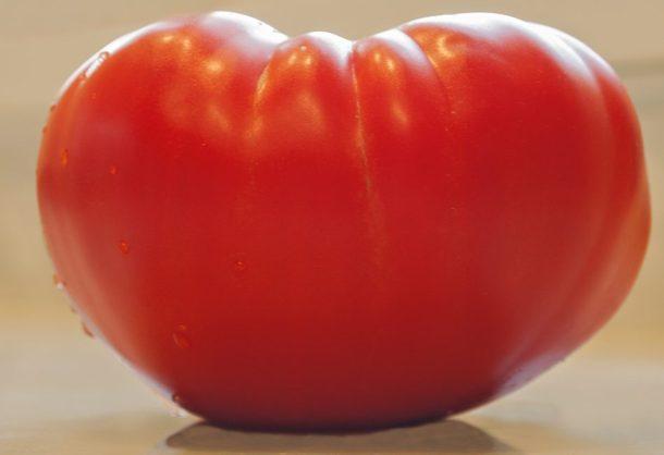 Big red Rico tomato