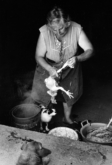 Woman slaughtering chicken.