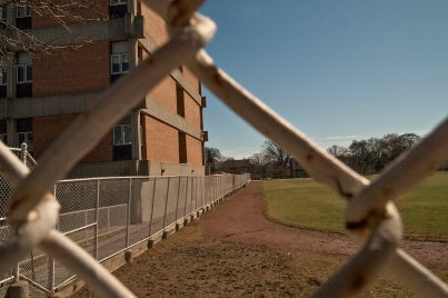 The fence through the fence.