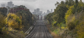 Toronto's Urban Forest