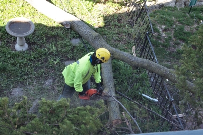Cutting limb with chainsaw near wire.